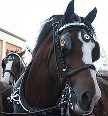 horseblinkers