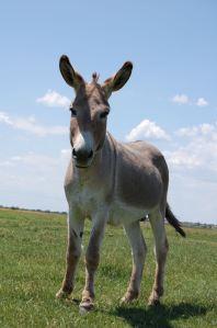 donkey_blob
